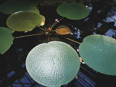 "Plants Pavilion • <a style=""font-size:0.8em;"" href=""http://www.flickr.com/photos/43619554@N00/21733990783/"" target=""_blank"">View on Flickr</a>"