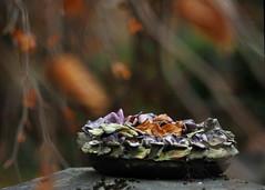 November dreaming (nikjanssen) Tags: november autumn grave ceramics belgium bokeh herfst vanagram oudkerkhofhasselt