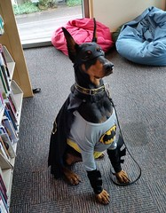 Bat Dog (Multnomah County Library) Tags: halloween batdog 2015 readtothedogs hillsdalelibrary