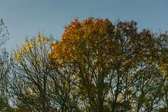 2015-11-01_Q8B3973 © Sylvain Collet.jpg (sylvain.collet) Tags: autumn france nature automne sur marne vairessurmarne vaires