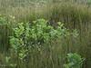 National Park De Hoge Veluwe (Luc V. de Zeeuw) Tags: park landscape hoge veluwe nationalparkdehogeveluwe