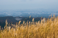 The view from Mt. Iwawakisan (nack74_sg) Tags: ススキ 遠景 岩湧山