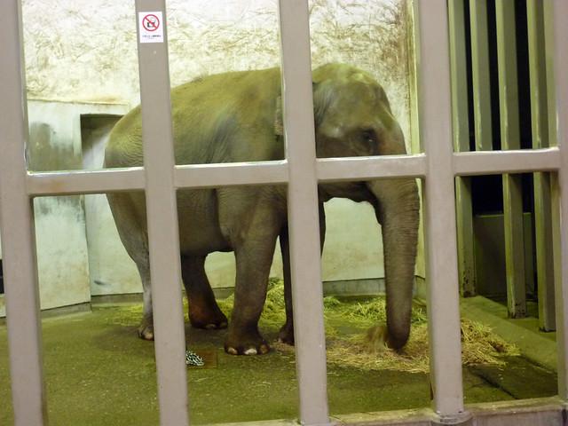 象は、おうちでお食事中でした。|いしかわ動物園
