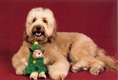 oh-christmas-tree--oh-christmas-treepopcorn-is-one-of-princess-and-chewys-puppies-_4177280979_o