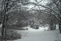 The Opening (melleus) Tags: park trees winter white snow cold nature weather grey cool gate arc d200 imagemagick dcraw