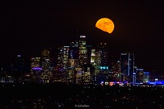 The most spectacular #supermoon Since 1948 lighting up the #sky of downtown #losangeles (#dtla )appearing 14% bigger and 30% brighter than usual. The moonrise was at 17:35 on Monday 14th. November 2016. (LeCachacs) Tags: latimes news explore travel nasa usa world sunset super california skyline downtown night america la moon supermoon sky losangeles