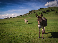 Mount(ain)s and Donkeys (J.Kieran) Tags: alpes donkey animals natur mountains clouds colors color animal light landscape green serenity