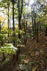 DSC07426 (sesquiotic) Tags: foliage fallfoliage ontariosciencecentre