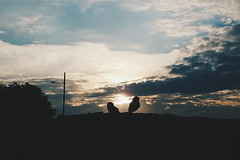 2016-10-22 08.40.22 1 (joãovitor25) Tags: sky paisagem corujas owls pordosol vsco vscocam vscobr