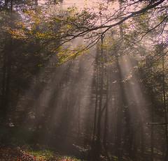 Rayos (Fermin Pagola) Tags: rayosdeluz urkiaga navarra otoño bosque quintoreal