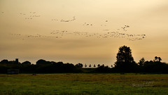 Herbstabend auf Rgen (seyf\ART) Tags: rgen landschaft landscape kste coast mecklenburg ostsee balticsea