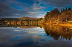 Burrator gold (snowyturner) Tags: dartmoor reservoir reflections clouds autumn golden landscape burrator trees