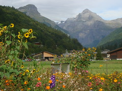Towards_Sixt-Fer-A-Cheval_from_the_lovely_garden_at_La_Chapelle (Abbey_L) Tags: alps day4restdaygorgesdestines flower france frenchalps garden mountains orangecosmos outbreakadventure samoens sunflower tjpio