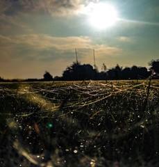 A million webs (bedders89) Tags: gossamerweb sundaymorningfootball beauty nature frost webs moneyspiders dew iphonemacro thawingout frostymorning mothernature autumn spidersweb morningdew