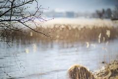 riverside (memories-in-motion) Tags: tegernsee licht ufer natur blau baum bokeh water wasser stimmung mood atmosphere lake bavaria bavern germany schilf horizon 85mm f12