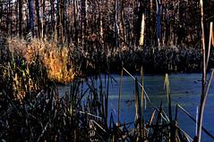 16-380 (lechecce) Tags: 2016 nature sharingart flickraward