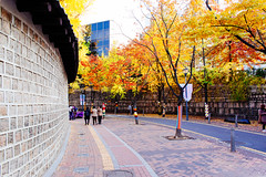 Autumn in Seoul (stuckinseoul) Tags:   sigma2470mmf28exdghsm seoul southkorea kr
