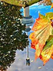 Autumn in Rotterdam (Giel Pieter) Tags: park euromast water tree reflection rotterdam panansoniclumixgx7 autumn gras leaf air clouds