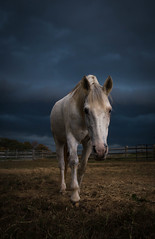 approaching (Jen MacNeill) Tags: storm stormy clouds weather sky dark cloudy coldfront farm horse horses equine grey white approaching