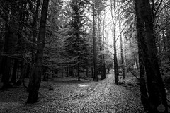 Darkness way out_ (stram36) Tags: france chamonix froid cold hiver autumn automne glace ice heurebleue alpes forest fort wood bois blackwhite mysterious feerique canon tokina 1116mm paysage landscape