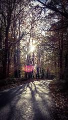 What if... (ggcphoto) Tags: trees road forest drive autumn winter light sun shining shadows irelans lumia love natural digital cellphone lumia650