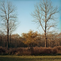 Antheringer Au (cardijo) Tags: austria sterreich salzburg landscape landschaft tree baum autumn herbst hasselblad planar kodak portra160 nikon coolscan