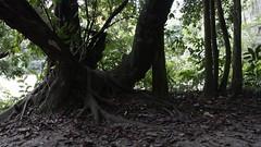 primitivos (el Hombre Viento) Tags: santander cascadas montaas vida life vidaprimitiva primitivos supervivientes jungle selva jungla mountain