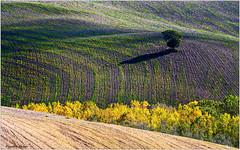 Terre d'Orcia (fausto.deseri) Tags: terredorcia valdorcia terresenesi sanquiricodorcia siena toscana panorama landscape pentaxk3 hdpentaxda55300mmf458edwr faustodeseri