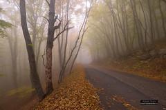 Road through misty beech wood (Kaiser Sozo) Tags: crimea mountain slope autumn fall fallenleaves leaves fog mist road wood beech trunk aipetry