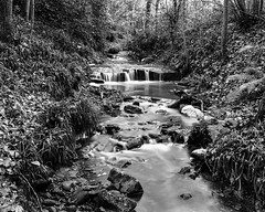 The Red Burn (Stanley Burn Woods) (Jonathan Carr) Tags: burn stream water black white bw toyo45a largeformat 4x5 5x4 landscape rural northeast