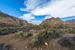 048-RRC160201_46961 (LDELD) Tags: nevada desert rugged dry harsh wild lasvegas redrocknationalconservationarea mountains cliff snow