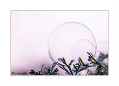 Playing again (francine koeller) Tags: bubble bulle matin morning drop goutte gouttelette