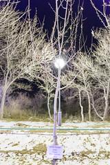 Helen Charman (Granmuc) Tags: baikonur cosmonaut alley trees