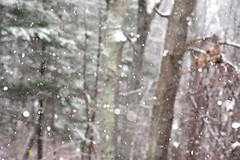 Summer's Over (lclower19) Tags: 522016 4852 wind air snow forest odc bokeh