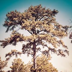 Houston Arboretum Series (J&E Adventures) Tags: naturewalk hike canonphotography naturecenter nature earth canon houston naturesecrets natureonly trees naturelover digital gardens outdoors canoneosrebel rebelt3 natural arboretum botanicgarden texas unitedstates us