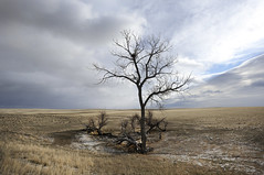 Desolate Tree (tomkellyphoto) Tags: wyoming desert plains sky clouds weather tree lonely desolate wright usa