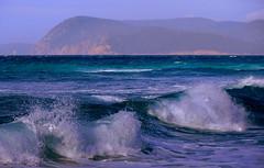 WILD SURF (Lani Elliott) Tags: ocean surf waves friendlybeaches beach scenictasmania wildsurf