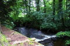 Cornwall #476 Liskeard 150611 River Fowey (Steveox55) Tags: cornwall liskeard riverfowey