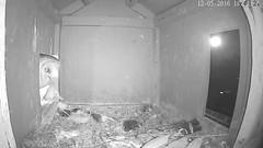 _1841_Didi left Jasper still calls (Birder23) Tags: barnowlmalecall jasper didi barnowls barnowlnesthouse