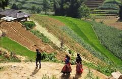 Landscape in CanCau (pdellouve) Tags: vietnam ricefield minority sapa hmong rizière