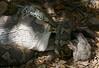 Jungle carpet python eating common brushtail possum, Pallarenda, Townsville, QLD, 09/04/08 (Russell Cumming) Tags: mammal morelia snake queensland python townsville moreliaspilota commonbrushtailpossum pallarenda moreliaspilotacheynei