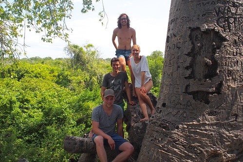 The Crew on an old huge tree