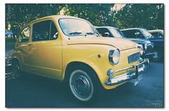 amarillito (_Joaquin_) Tags: ex car familia uruguay dc nikon fiat sigma joaquin 600 autos montevideo 1020mm encuentro dx clasics clasicos hsm d3200 parquebatlle 6deseptiembre joafotografia joalc lapizaga