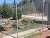 20150919_122247 (mjfmjfmjf) Tags: oregon zoo 2015 greatcatsworldpark