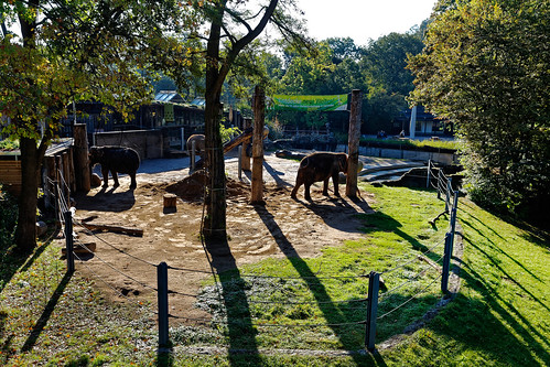 Elephants at the zoo of Karlsruhe