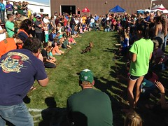 """Wauktoberfest 2015 • <a style=""""font-size:0.8em;"""" href=""""http://www.flickr.com/photos/123920099@N05/21710178166/"""" target=""""_blank"""">View on Flickr</a>"""