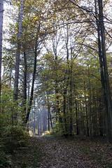 IMG_3134-Modifier (mycenium) Tags: wood mushroom canon belgium region foret brabant champignon bois 6d wallon wallonie wallone belgiquie