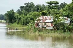 H502_2128 (bandashing) Tags: england house tree wet water rain manchester tin boat flood transport row hut monsoon sylhet bangladesh embankment floods socialdocumentary aoa bandashing akhtarowaisahmed 22tila goyainnodi