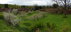 CHARTWELL, House of Sir Winston Churchill, the orchard (claude.lacourarie) Tags: park uk flowers england tree castles apple kent spring unitedkingdom britain eu orchard churchill winstonchurchill manor nationaltrust printemps palaces chartwell manoir cottages statelyhomes manorhouses