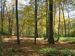 Route du bois du Roi (~Louna~) Tags: wood autumn nature automne plante fairy paysage forêt